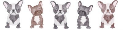 5 French Bulldogs Introvert Rating System